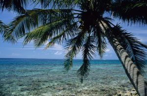 Outer Caye